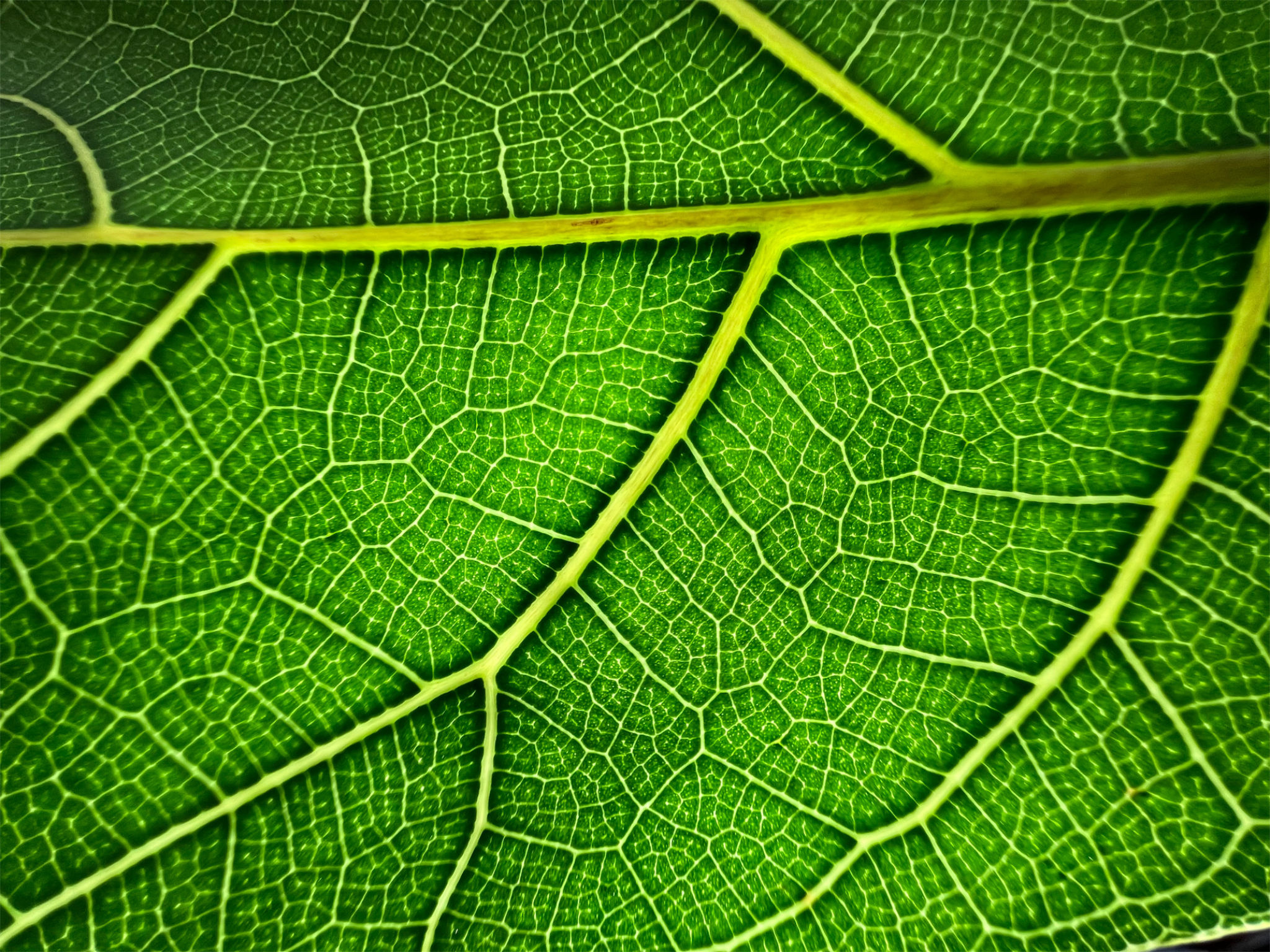 ontop.vn Apple iPhone 13 Pro Leaf 09142021